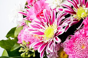 pink aster background