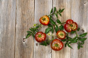 Homegrown organic tomatoes on wood