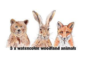 Watercolor Animals Bear Hare Fox