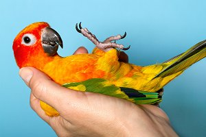 A Parrot in the Hand