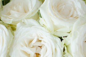 White rose floral stock image