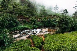 Mountain river among tea plantations