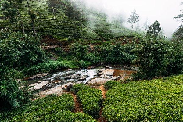 Nature Stock Photos: SOTNIKOV_MISHA - Mountain river among tea plantations