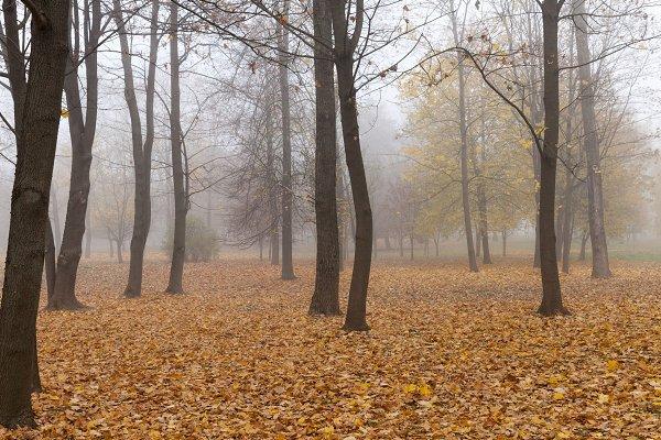 Stock Photos: rsooll - autumn park c
