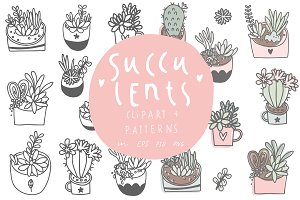 House plants - succulents and cacti