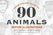 90 Animals Vintage Illustrations by  in Graphics