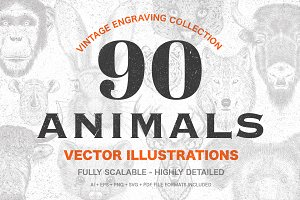 90 Animals Vintage Illustrations