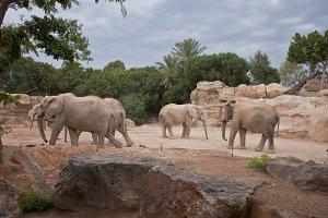 Elephants in the zoo
