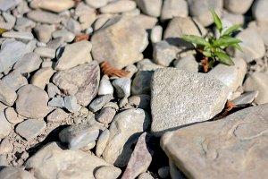 Stone pebbles dry