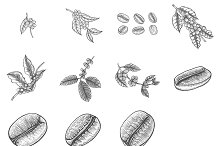 Set of Coffee tree vectors by  in Illustrations