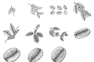 Set of Coffee tree vectors