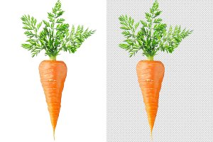 One isolated carrot with leaves