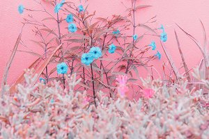 Plants on pink fashion concept. Roma
