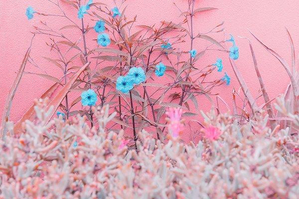 Stock Photos: Porechenskaya - Plants on pink fashion concept. Roma