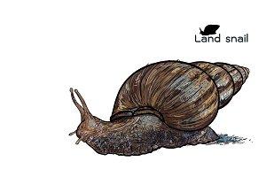 Crawling land snails