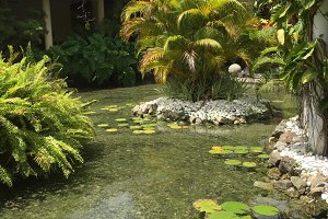 Tropical Pond