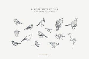 Bird Illustrations: Vector Pack
