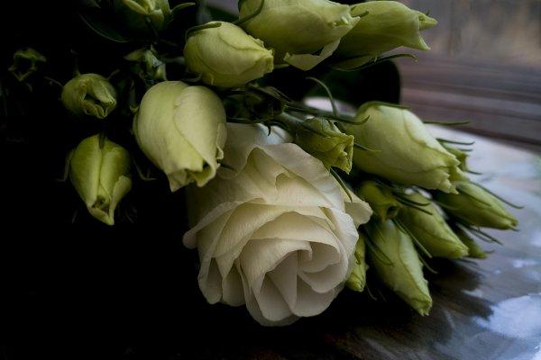 Abstract Stock Photos: trebolfour - bunch of eustoma lisianthus