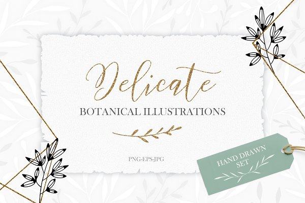 Delicate Botanical Illustrations