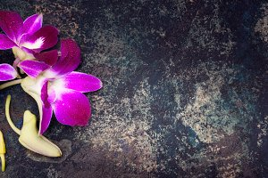Background with purple orchid flower