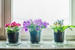 Flowers pots on windowsill
