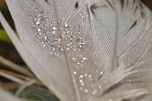 Feather Sparkle