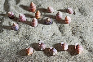 shells on the sand beach