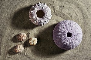 sea urchins fossil on the beach