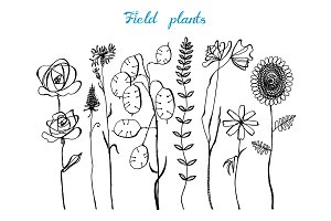 Field Flowers with leaves. Set