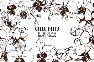 Hand sketched orchid flowers