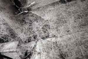 Cobweb in the corner
