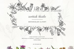 Hand Painted & Sketched Thistle