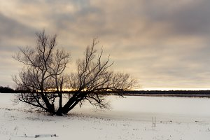 Lonely Trees In Winter