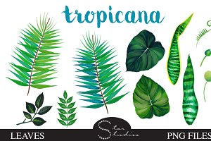 Tropicana Leaves pack
