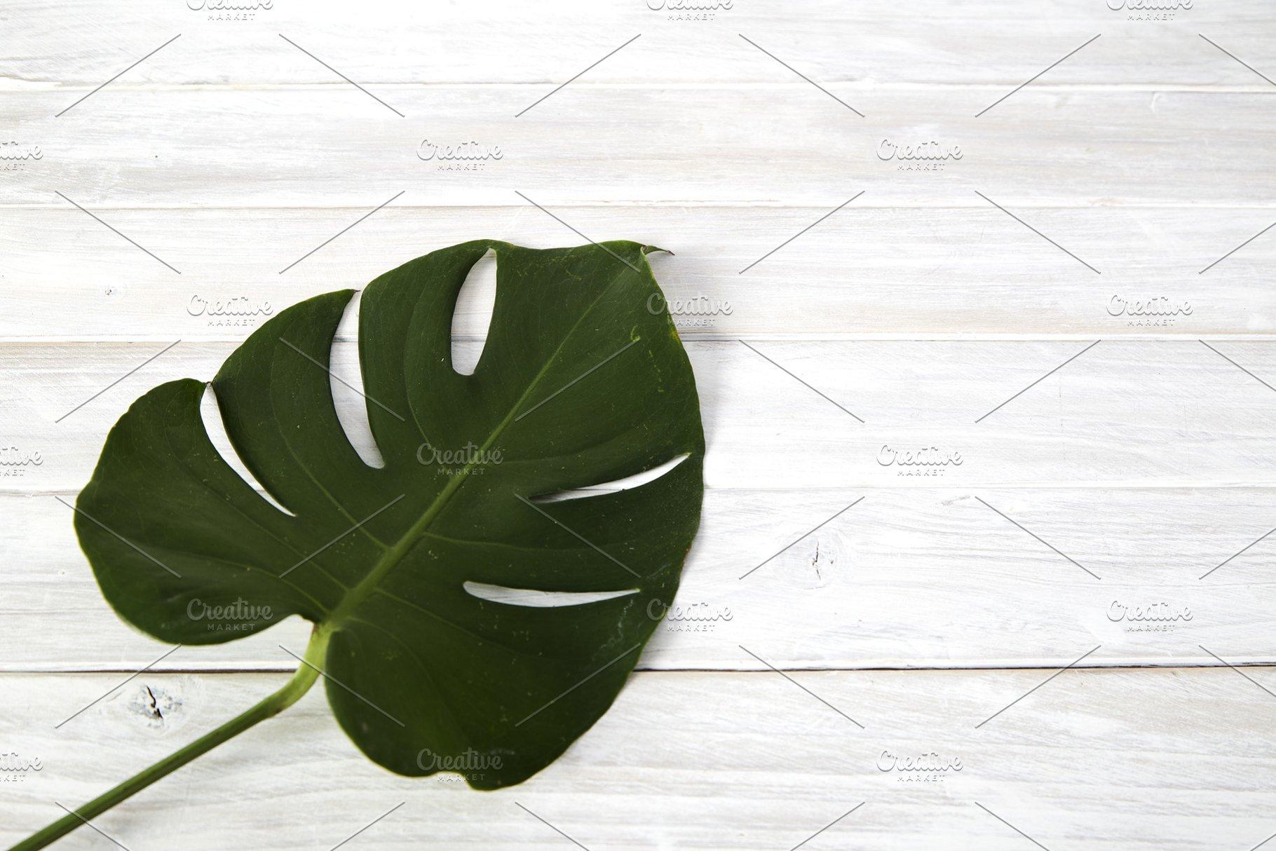 Green monstera leaves on white woode