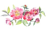 Bouquet with tea roses Watercolor