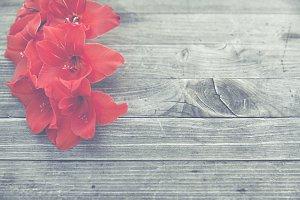 colorful blossom