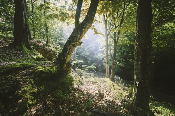 Stock Photos: Atmospheric visuals - Enchanted green forest with sunlight