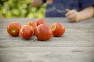 child harvest fresh bio tomato