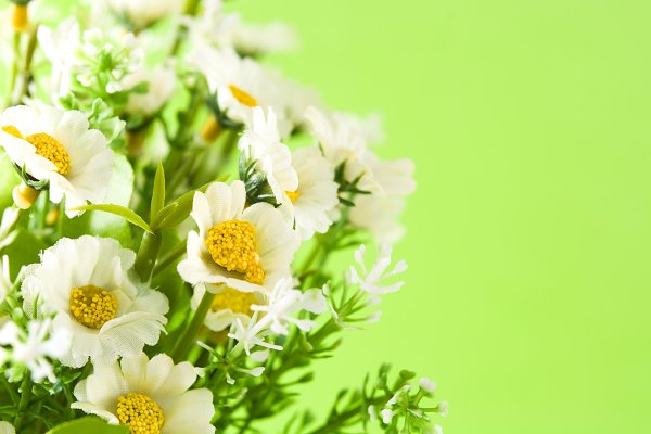 Food Images - Daisy flower