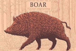 Design set Boar. Vector engraving