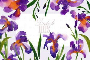 Dutch Iris-Watercolor Clip Art