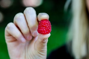 Raspberry holding in the hand
