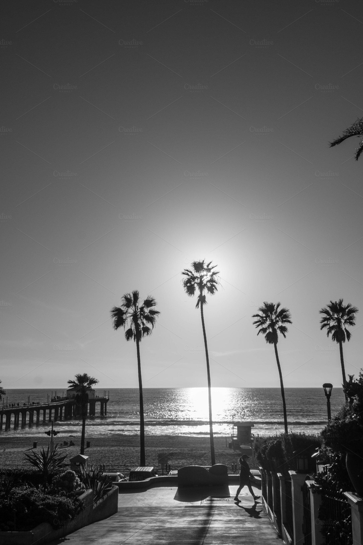 Black white photo of palm trees