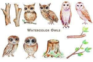 Watercolor Owl Clipart