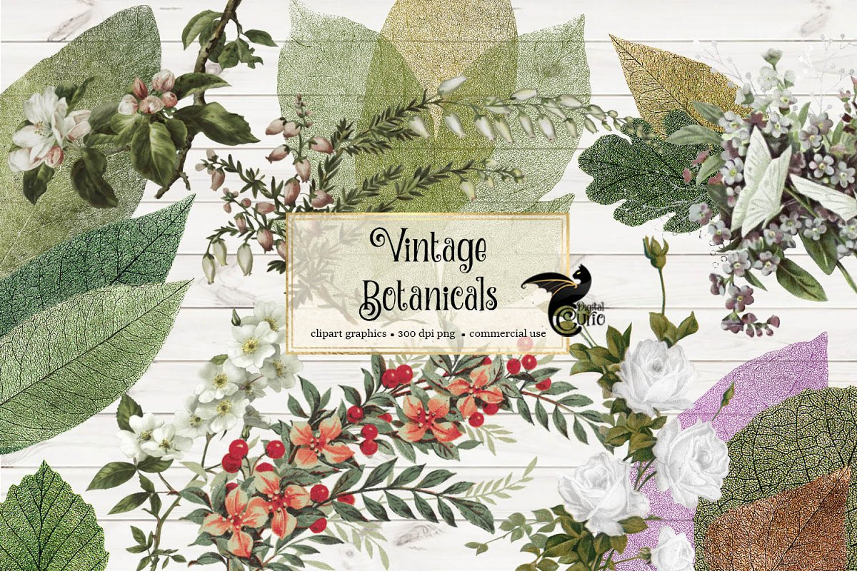 Vintage Botanical Clipart in Illustrations - product preview 8
