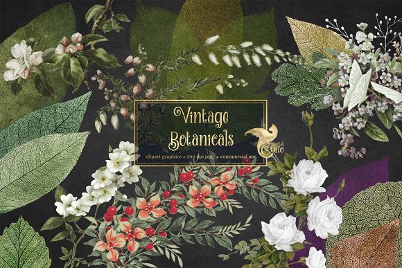 Vintage Botanical Clipart in Illustrations - product preview 1
