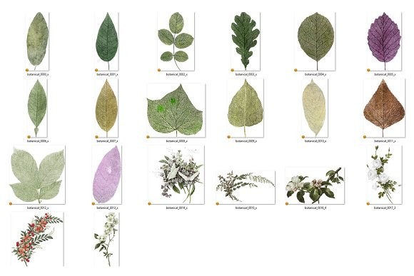 Vintage Botanical Clipart in Illustrations - product preview 2