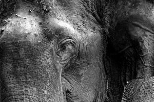 Elephant Closeup!