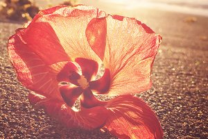 Red Tropical Blossom on the Beach